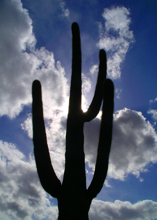 Silhouette of a cactus against a blue sky.